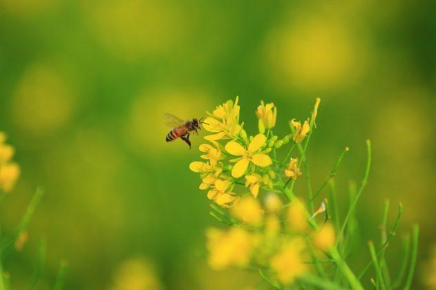 蜂 夢占い