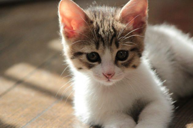 猫 夢占い
