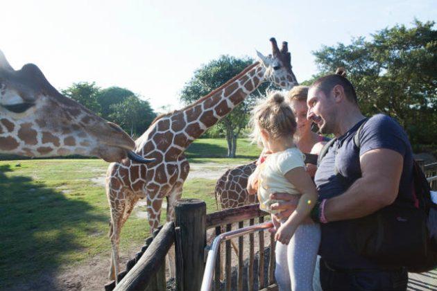 動物園 夢占い