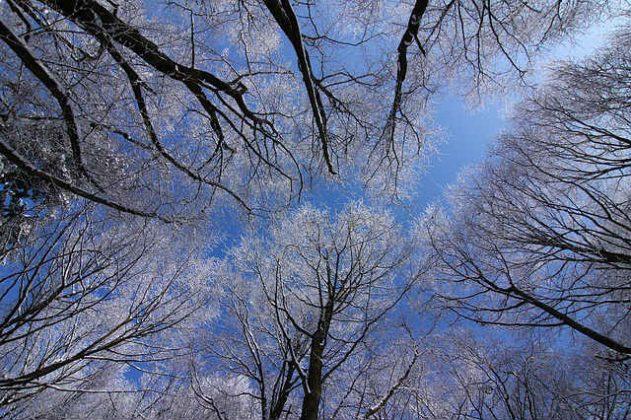 冬 夢占い