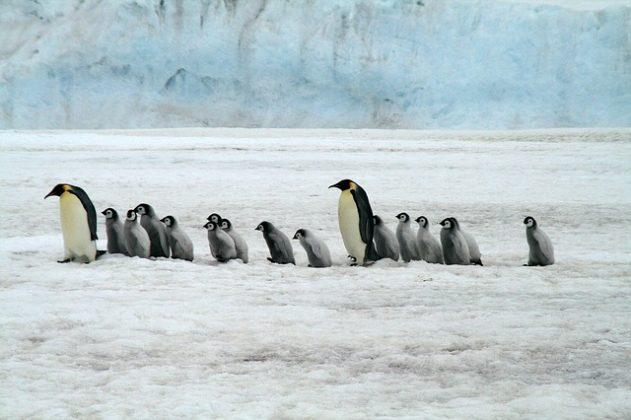 ペンギン 夢占い