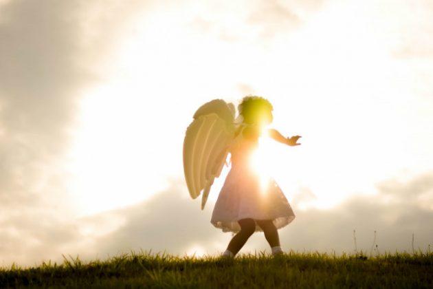 翼 羽 夢占い